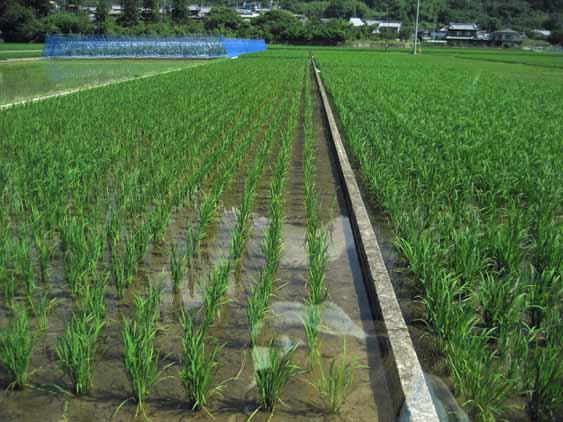 http://tomo.sblog.jp/ta/2012710ida.jpg