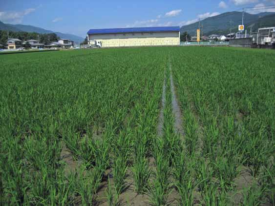 http://tomo.sblog.jp/ta/2012710nishi.jpg
