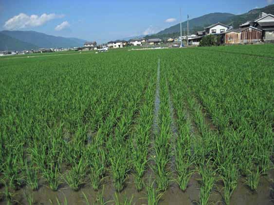 http://tomo.sblog.jp/ta/2012710tukuda.jpg