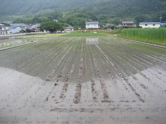 http://tomo.sblog.jp/ta/2012seki1.JPG
