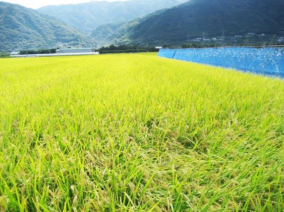 http://tomo.sblog.jp/ta/ida2012103.jpg