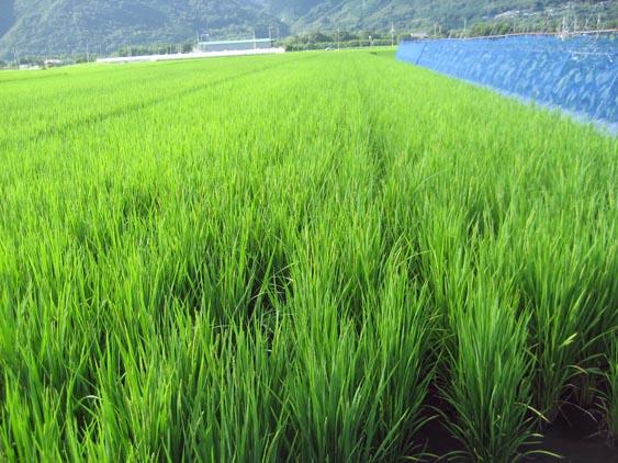 http://tomo.sblog.jp/ta/ida2012824.jpg