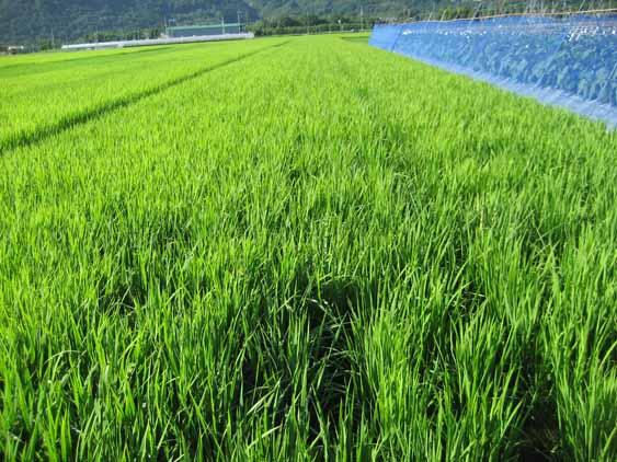 http://tomo.sblog.jp/ta/ida201283.jpg