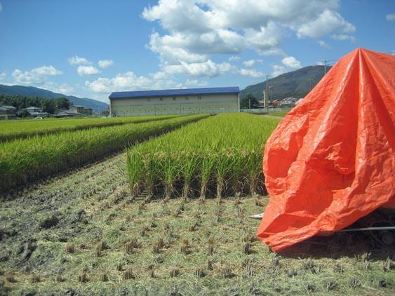 http://tomo.sblog.jp/ta/nishi2012103.jpg