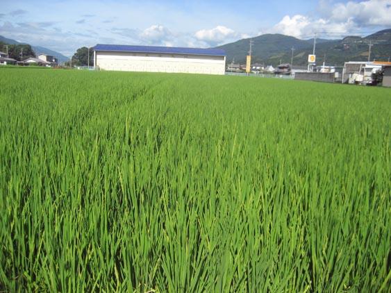 http://tomo.sblog.jp/ta/nishi2012824.jpg