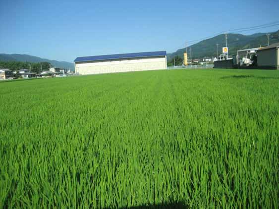 http://tomo.sblog.jp/ta/nishi201283.jpg