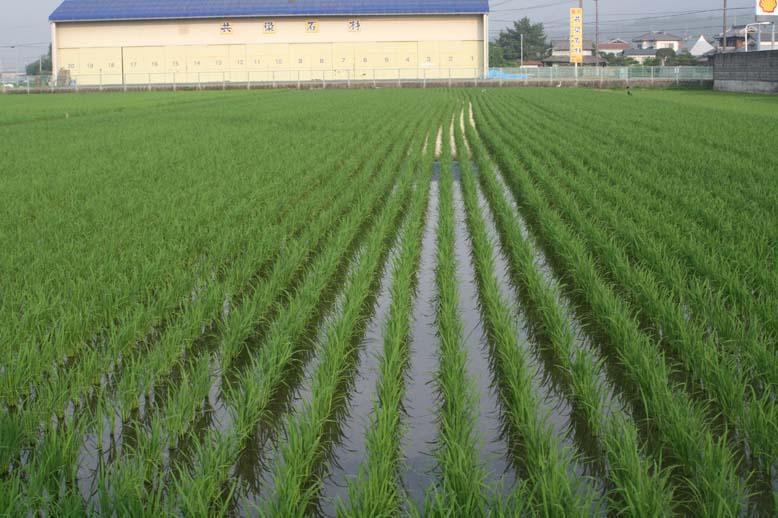 http://tomo.sblog.jp/ta/nishi7.jpg