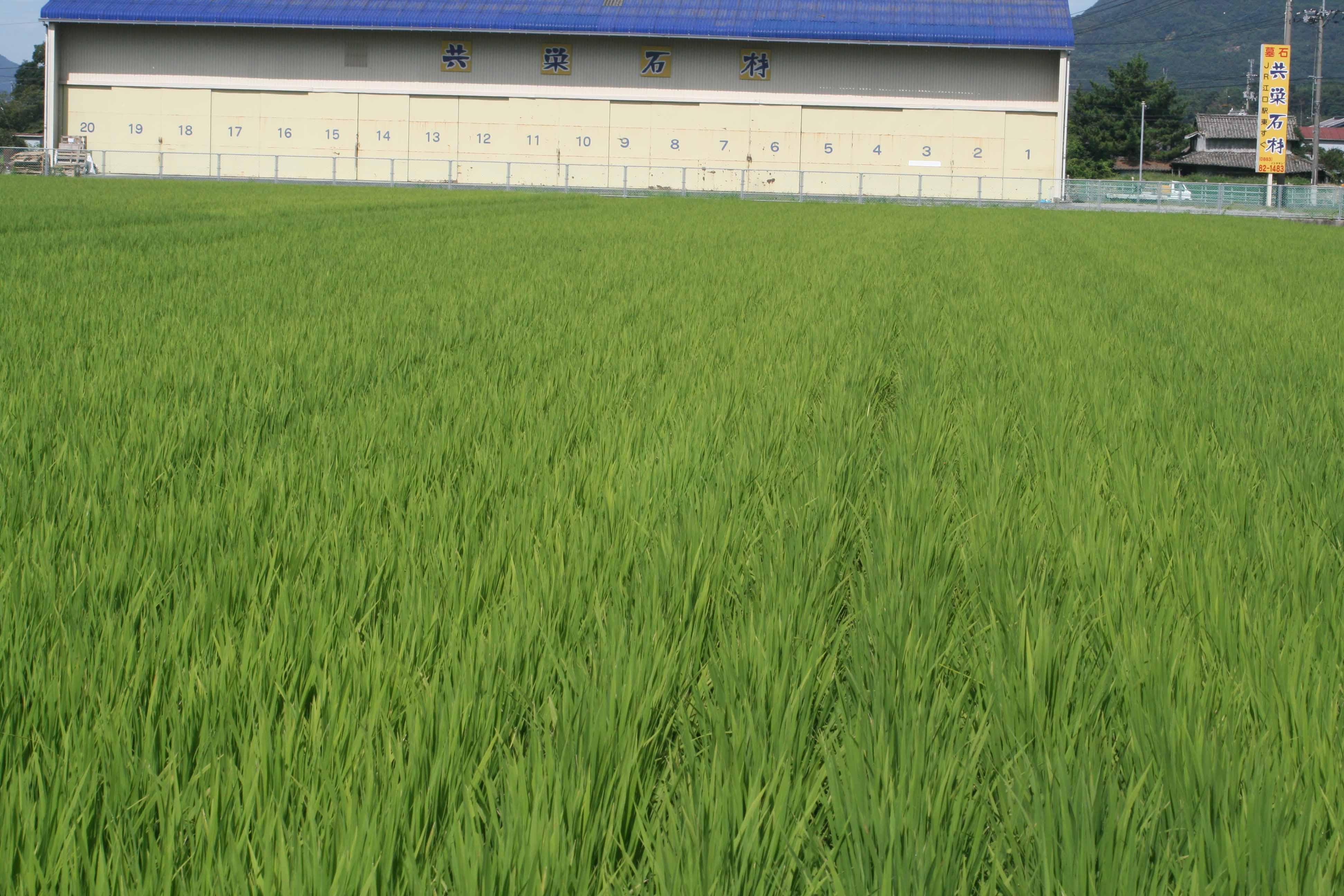 http://tomo.sblog.jp/ta/nishi88.jpg