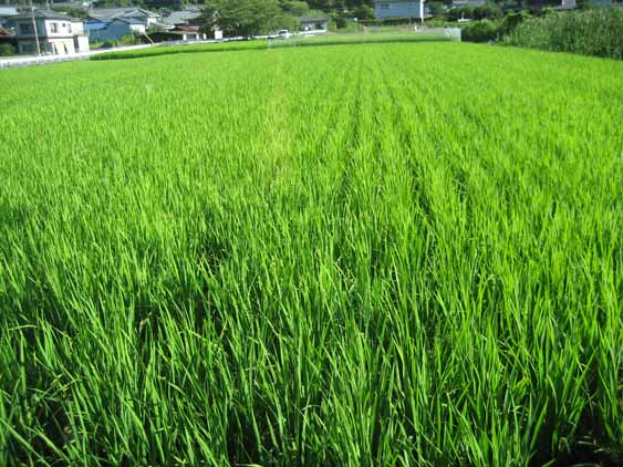 http://tomo.sblog.jp/ta/seki201283.jpg