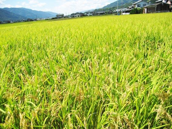 http://tomo.sblog.jp/ta/tukuda2012103.jpg