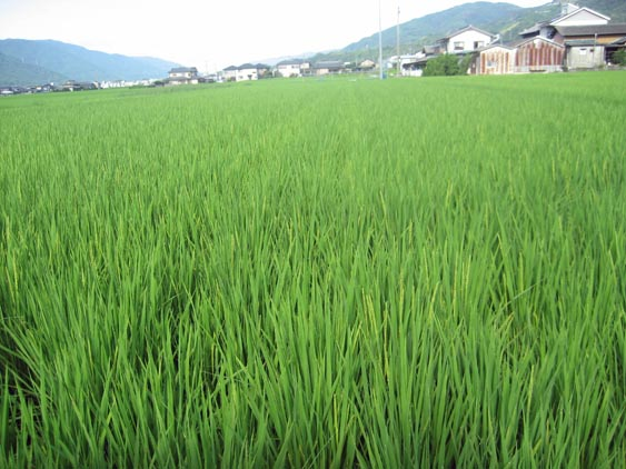 http://tomo.sblog.jp/ta/tukuda2012824.jpg