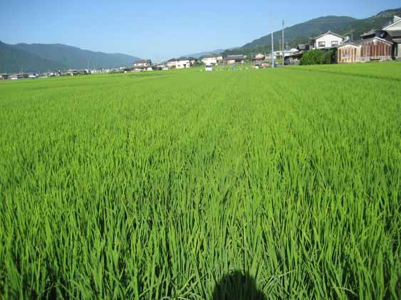 http://tomo.sblog.jp/ta/tukuda201283.jpg