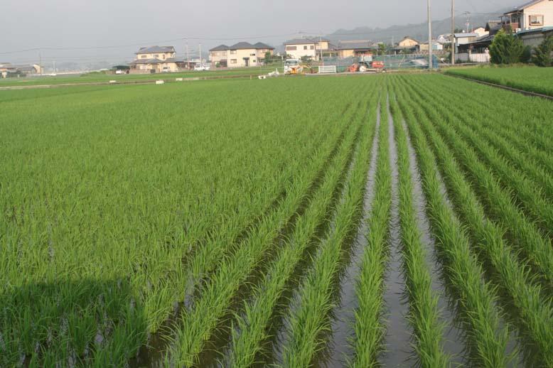 http://tomo.sblog.jp/ta/tukuda7.jpg